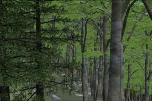 地熱開発エリア内の林内景観